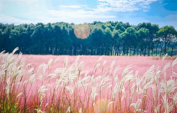 Đà Lạt tháng 11: Khám phá 'đồi cỏ hồng' đẹp như tranh vẽ